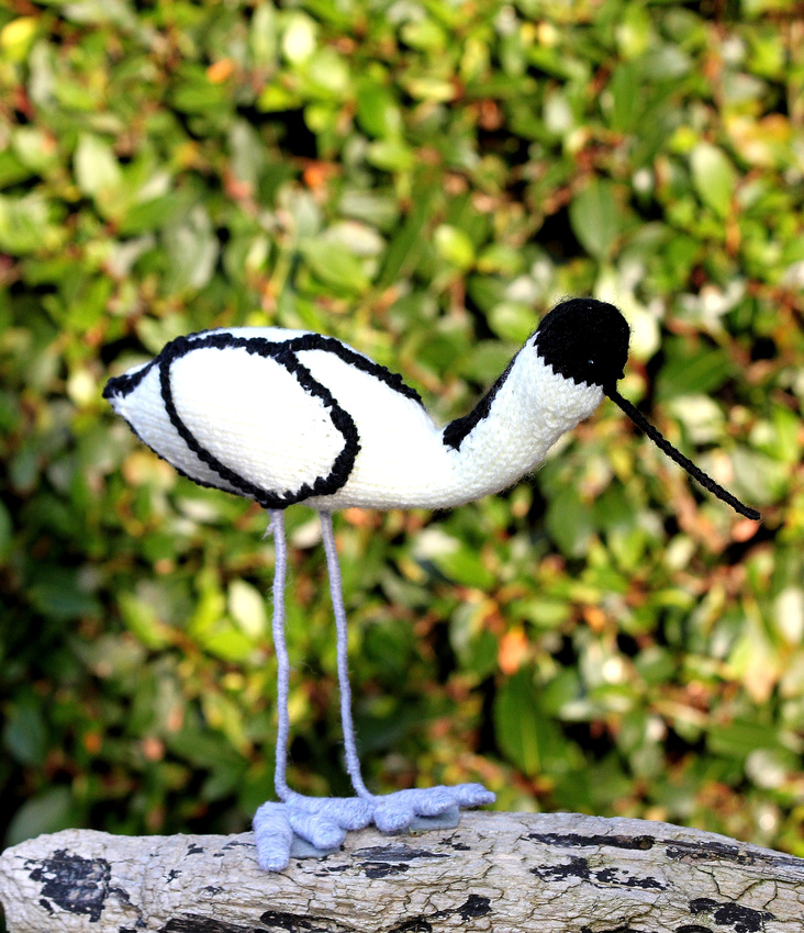 Avocet by Sheila