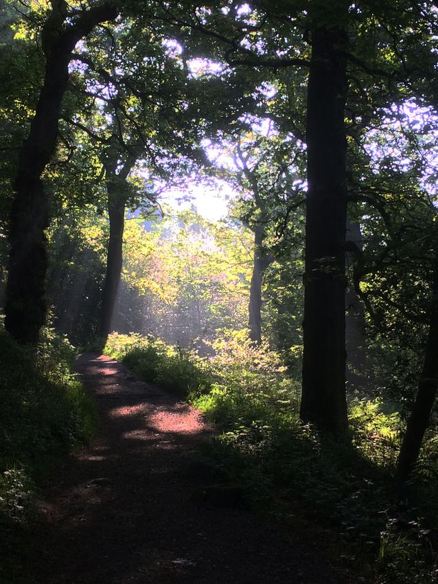 Bolton Abbey Walk